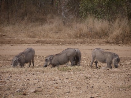 7.14.14 Thornybush AM drive (1)