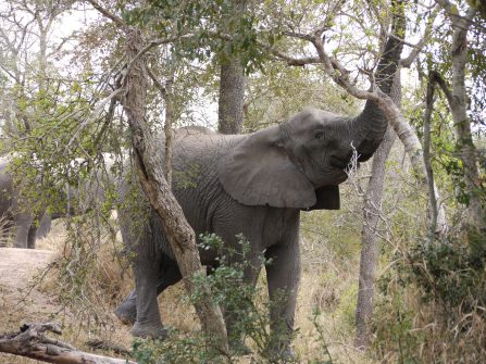7.14.14 Thornybush AM drive (5)