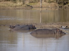 7.16.14 Thornybush AM drive (10)