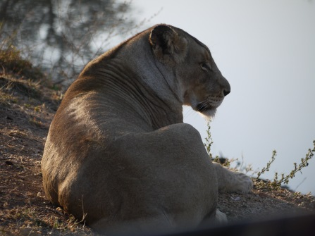 7.16.14 Thornybush AM drive (20)