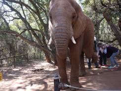 7.5.14 Elelphant Sanctuary (21)