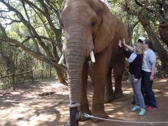 7.5.14 Elelphant Sanctuary (23)