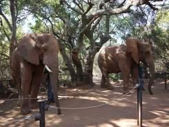 7.5.14 Elelphant Sanctuary (29)